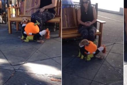 Cutest Dog In Petaluma California