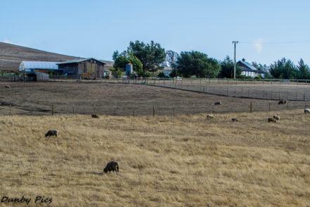 Canvas Ranch